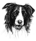 Border Collie Personalised Correspondence Cards with Envelopes